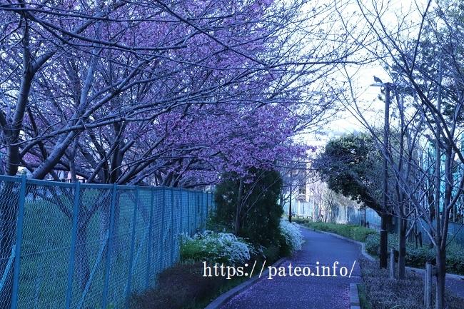 足立区の街散歩 454_a0214329_22065332.jpg