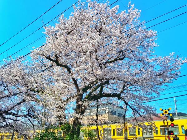 bloom_b0172633_16253656.jpg