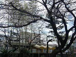 桜が…_e0325335_1402076.jpg