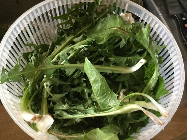 庭に生えるものを食べる_f0310138_06544774.jpeg