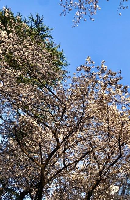 4/17(金)大塚グレコ公演中止のご案内_a0103940_21212233.jpeg