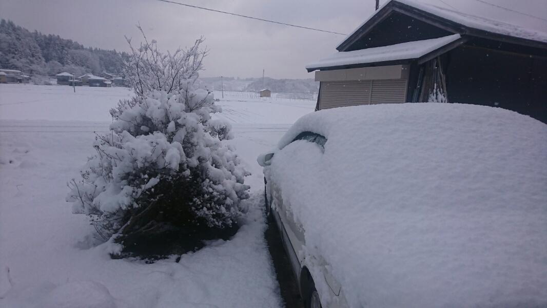春の雪_f0081443_23034842.jpg