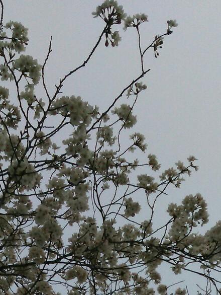 saw the spring_b0136144_10595911.jpg