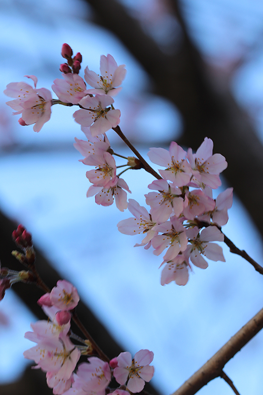京都市中京区_b0186148_18405059.jpg