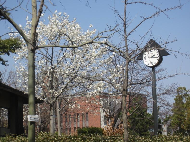 桜が咲いた_a0399157_14514812.jpg