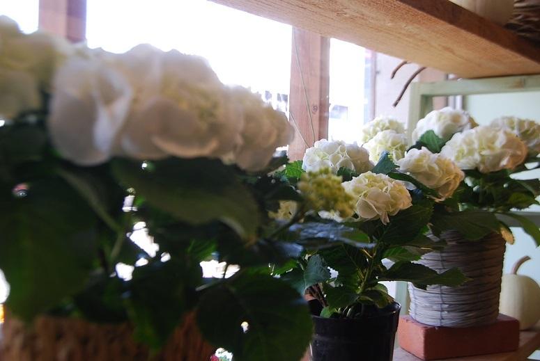入荷の花鉢、花瓶などなど!_a0201358_17391938.jpg