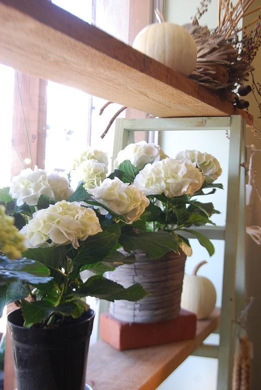 入荷の花鉢、花瓶などなど!_a0201358_17393054.jpg
