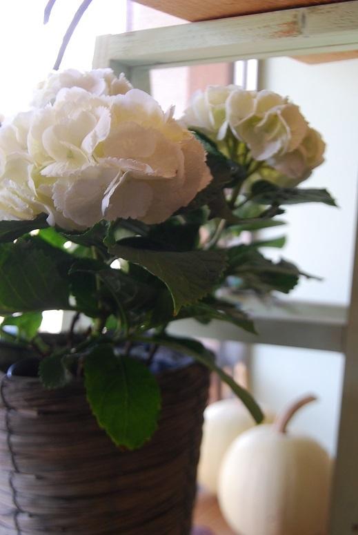 入荷の花鉢、花瓶などなど!_a0201358_17394400.jpg