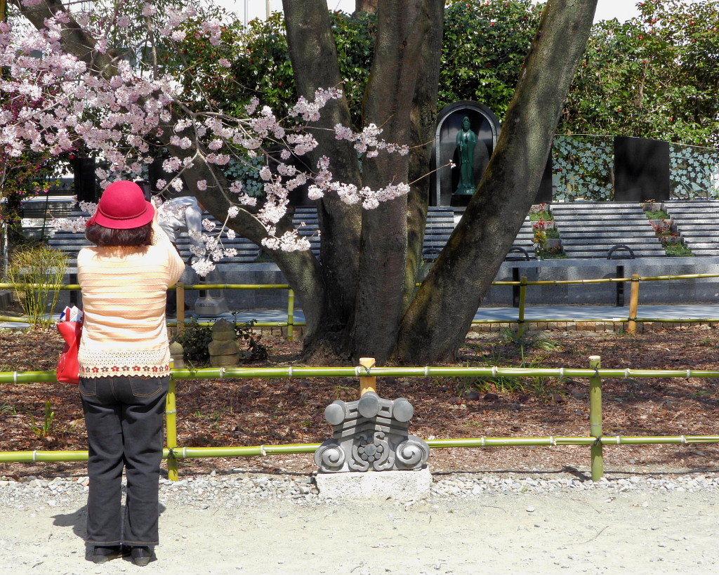 仁叟寺の五輪桜_c0305565_17403754.jpg