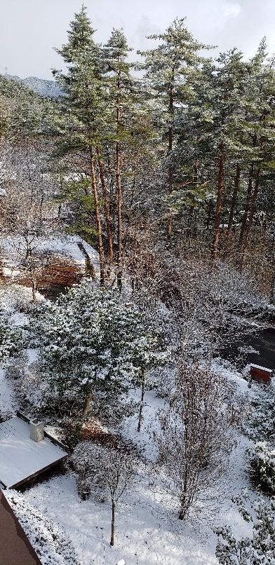 雪が降った様ですね_b0222066_07523619.jpg