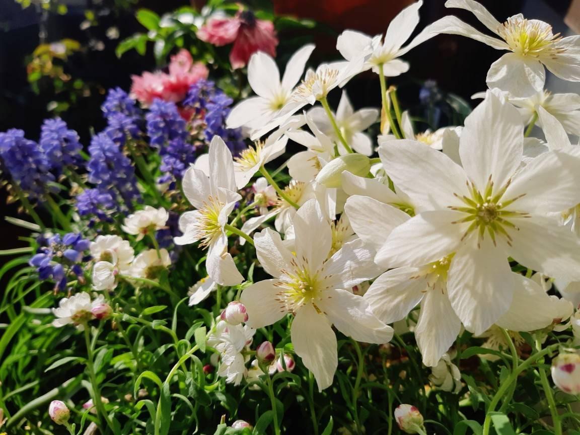 いっきに花盛り_b0369666_17183894.jpg