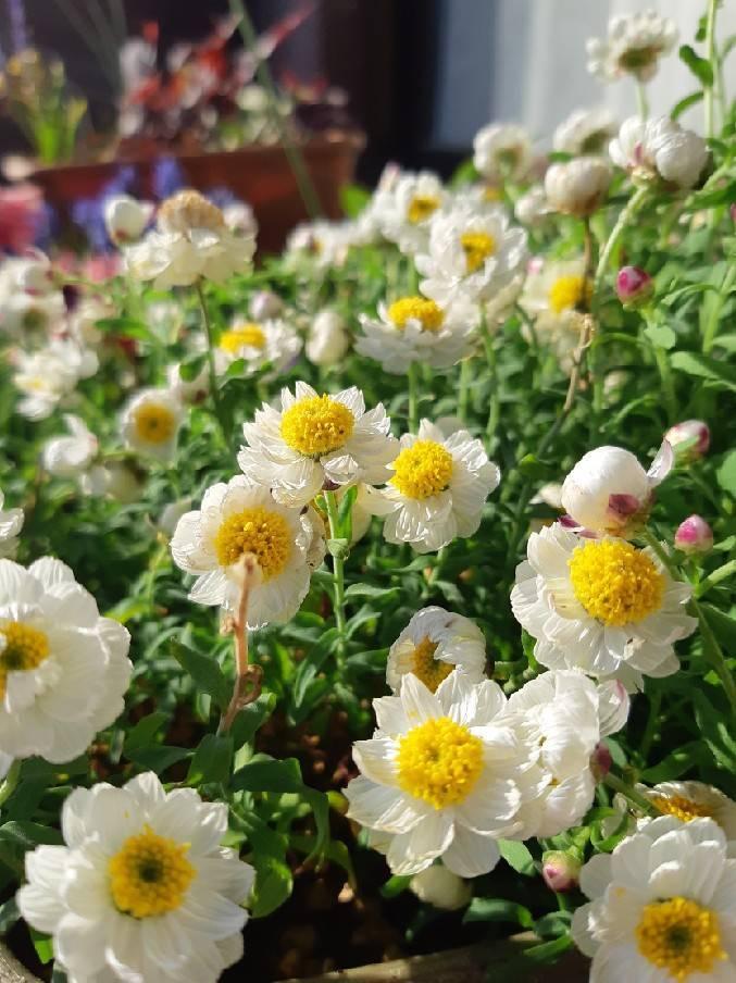 いっきに花盛り_b0369666_17543598.jpg