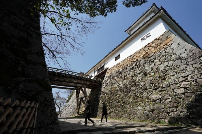 国宝彦根城、桜は? +千代神社_b0173867_17181522.jpg