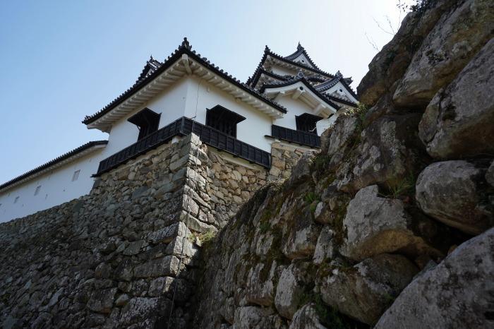 国宝彦根城、桜は? +千代神社_b0173867_17184504.jpg