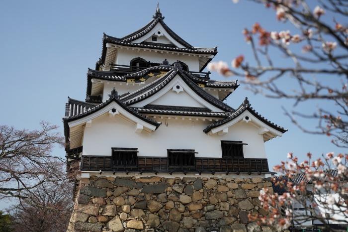 国宝彦根城、桜は? +千代神社_b0173867_17191259.jpg