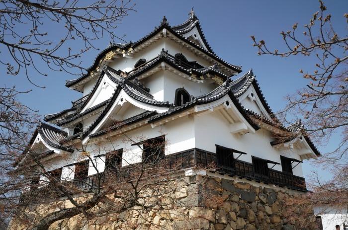 国宝彦根城、桜は? +千代神社_b0173867_17192540.jpg