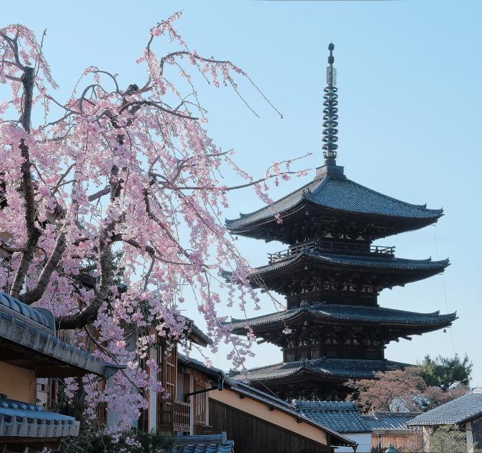 桜 2020_f0021869_22524603.jpg