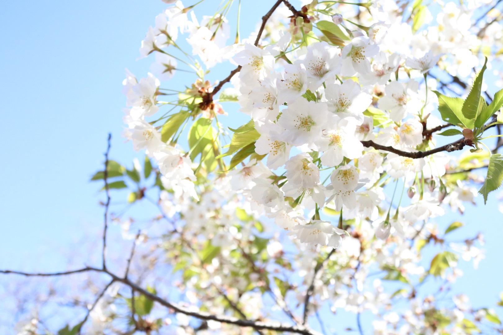 2020/03/25 傷ついた心には花より現金_b0164774_18372823.jpg