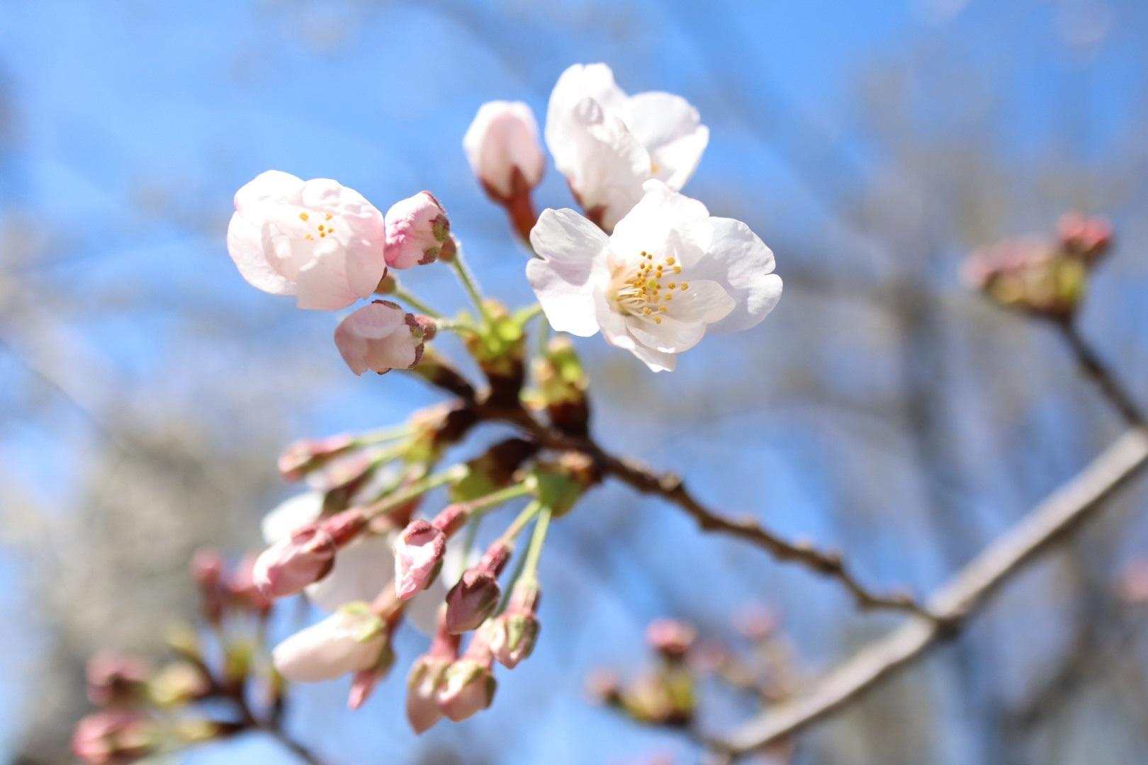 2020/03/25 傷ついた心には花より現金_b0164774_18375011.jpg