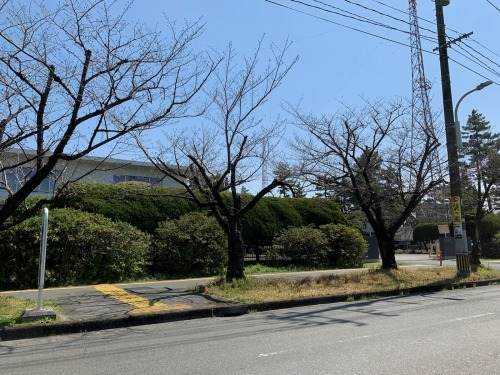 自衛隊通り 桜_f0363775_13052533.jpg