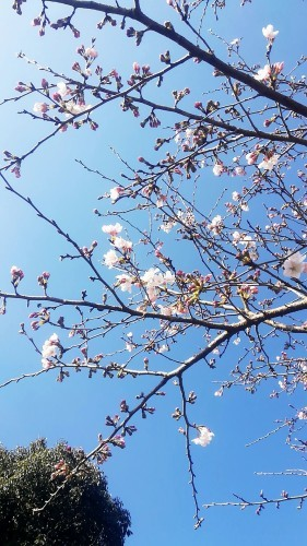 熊本から華道家さん_d0195183_00443781.jpg