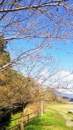 熊本から華道家さん_d0195183_00452714.jpg