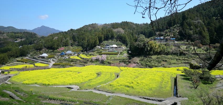 菜の花 が 暖を 呼ぶ_f0368583_16205015.jpg