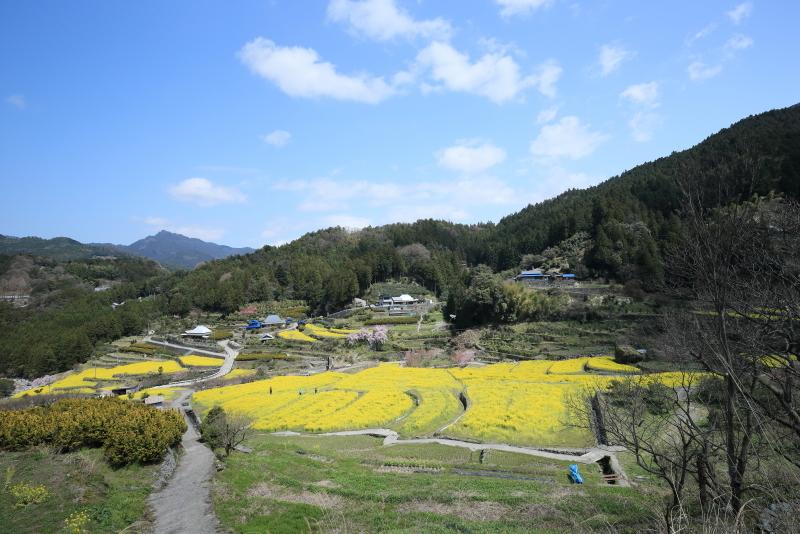 菜の花 が 暖を 呼ぶ_f0368583_16213640.jpg