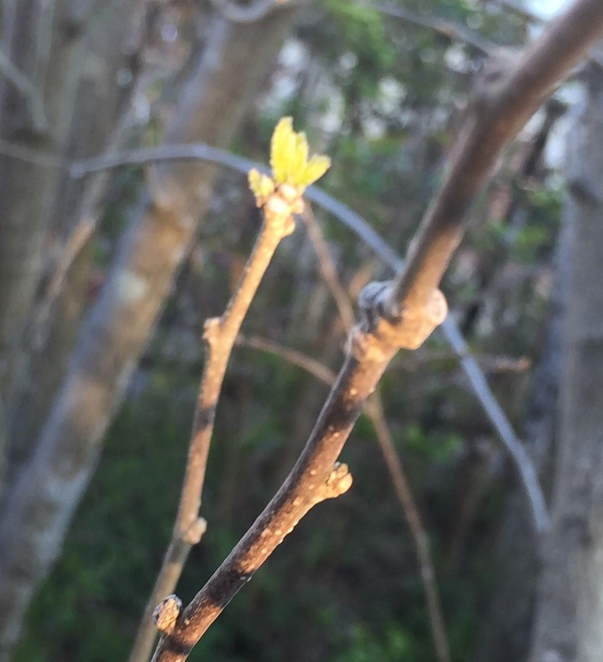 桜が咲きました!_e0190287_13591015.jpg