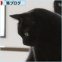 行列のできる猫の道_a0389088_03535638.jpg