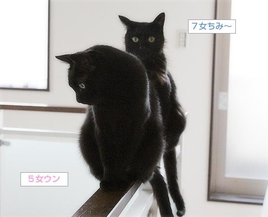 行列のできる猫の道_a0389088_03535639.jpg