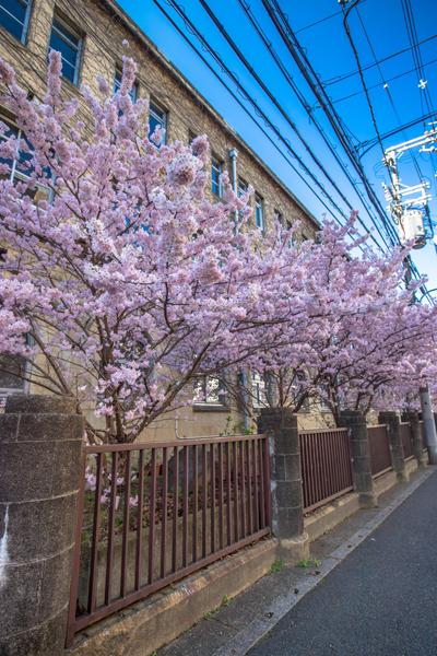 旧成徳中学校_e0051888_21461252.jpg