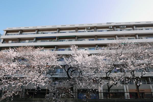 中目黒-目黒川-桜_d0118589_09575244.jpg