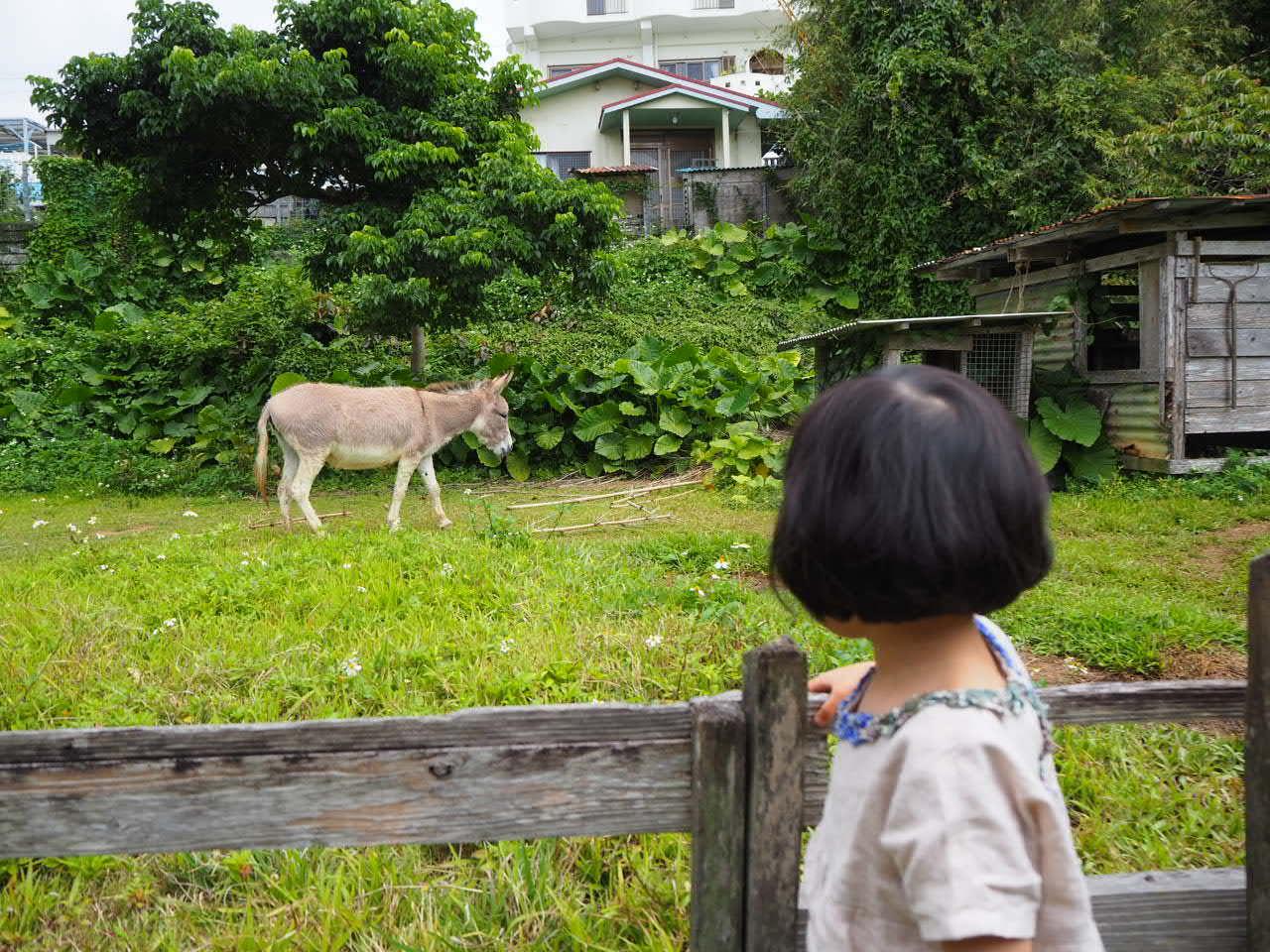 沖縄3日目 なんくるないさ一な日。_f0370091_21240464.jpg