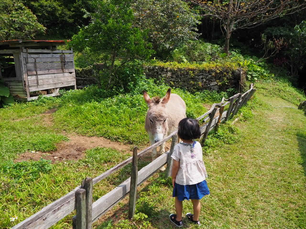 沖縄3日目 なんくるないさ一な日。_f0370091_21245674.jpg