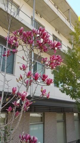 春の花いろいろ_e0281793_09581749.jpg