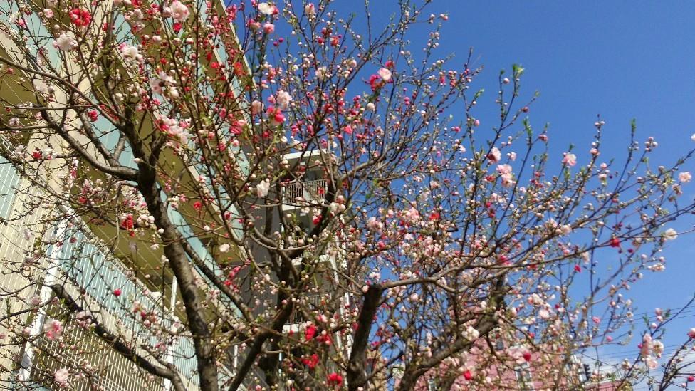 春の花いろいろ_e0281793_09581778.jpg