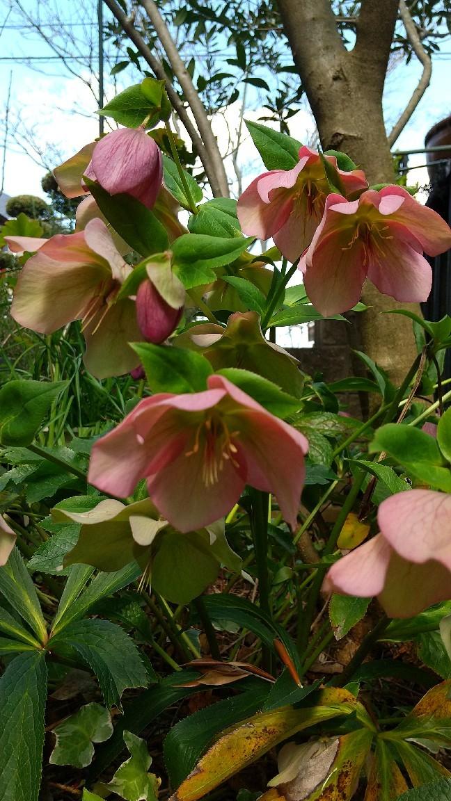 春の花いろいろ_e0281793_09581829.jpg