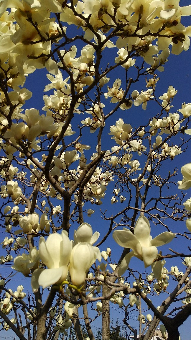 春の花いろいろ_e0281793_09581835.jpg