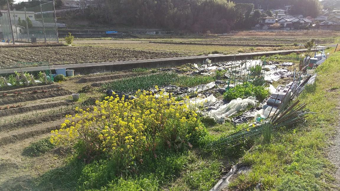春の花いろいろ_e0281793_09581850.jpg