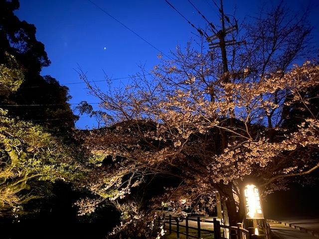 桜がキレイ♪_f0232994_14064122.jpg