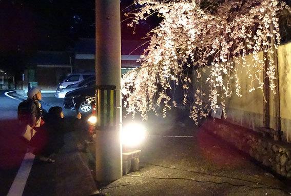 イトザクラの夜桜見物_b0145296_20131474.jpg