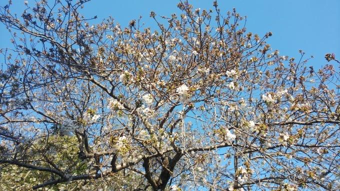 春うらら   5_b0239402_16573784.jpg
