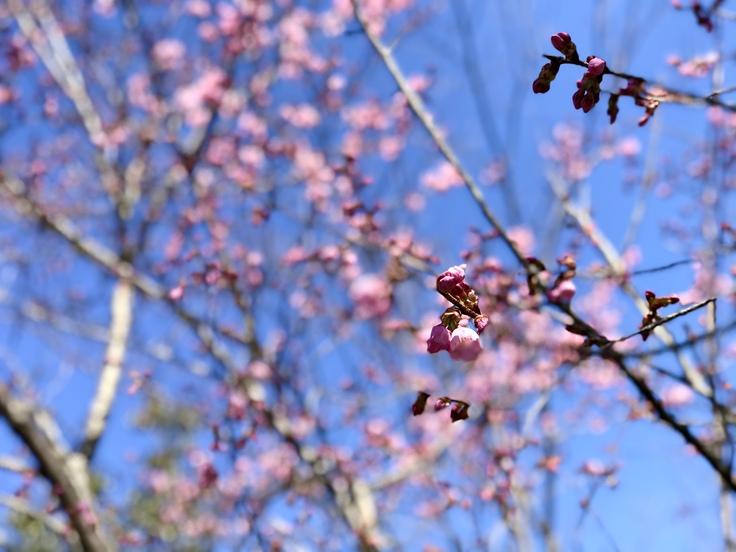 宮ヶ瀬ブルーと草抜きと山ごはん_c0212604_13562591.jpg