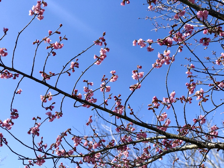 宮ヶ瀬ブルーと草抜きと山ごはん_c0212604_1357157.jpg