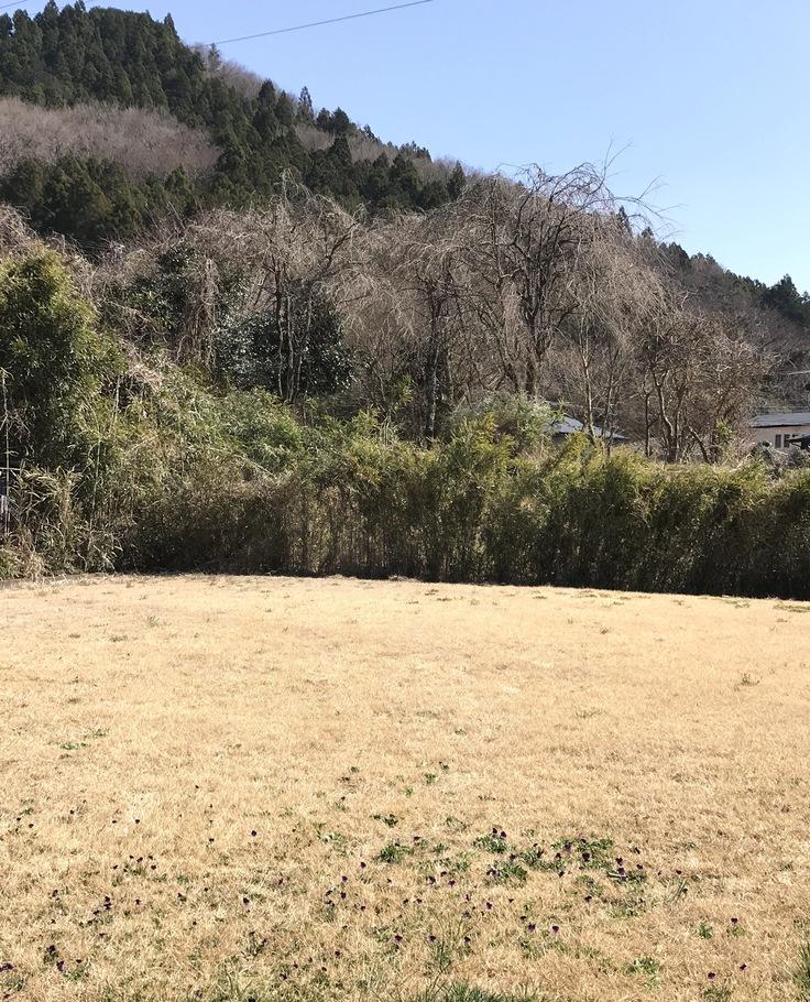 宮ヶ瀬ブルーと草抜きと山ごはん_c0212604_1435719.jpg