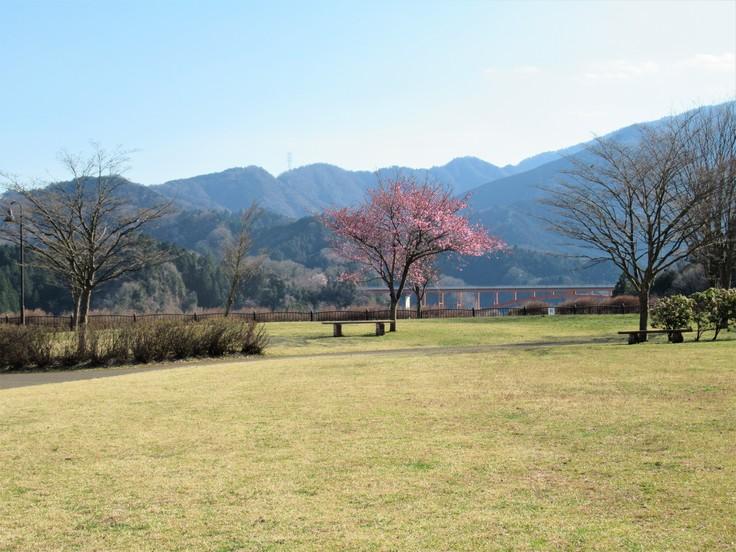 公園の1本の樹_c0212604_19472815.jpg