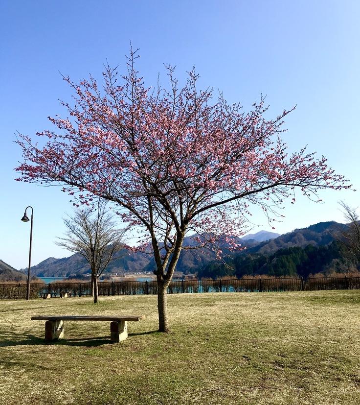 公園の1本の樹_c0212604_2023896.jpg