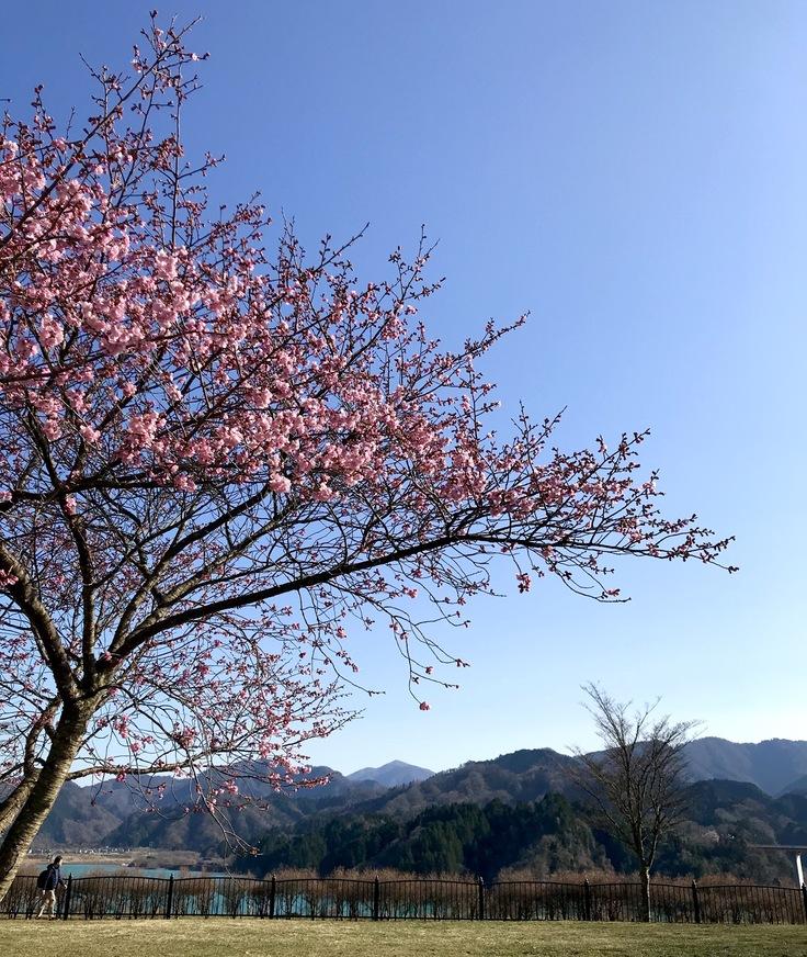 公園の1本の樹_c0212604_2034138.jpg