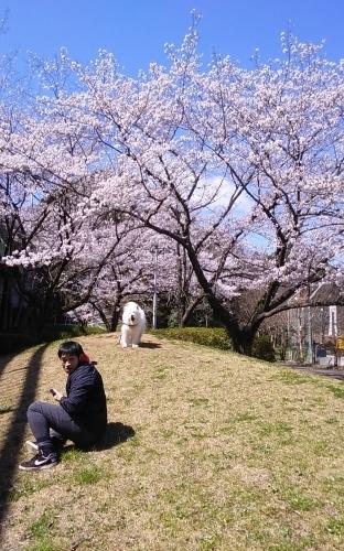 桜~✿_e0018604_15065915.jpg